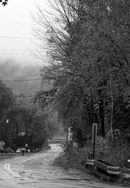 Fog in the hills 2010