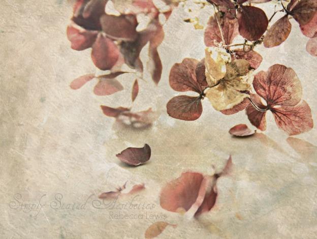 2011 burgundy hydrangea txtr cr signed