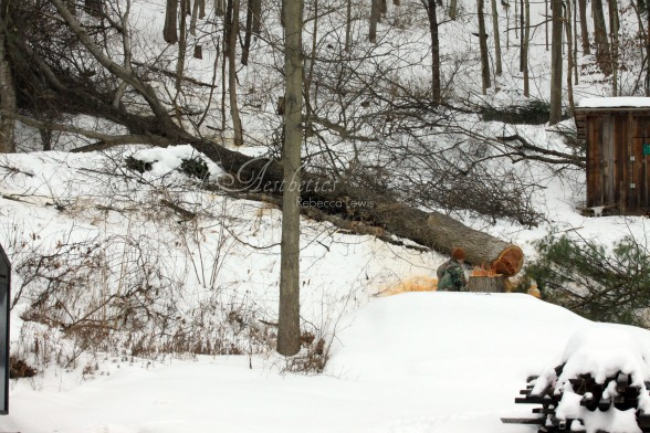 2011 tree cutting 4 sgn